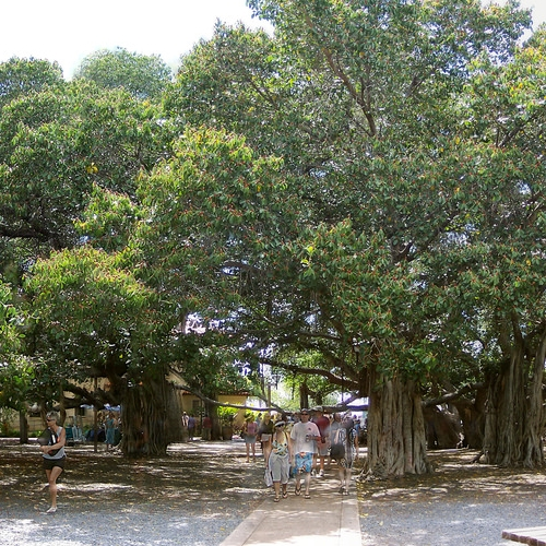 라하이나 마을