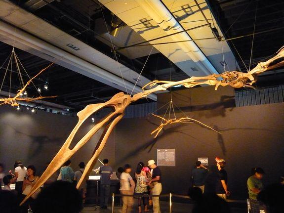 ケツァルコアトルスの全身復元骨格
