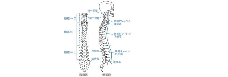 一 圧迫 骨折 腰椎 第
