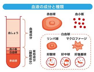 血液の成分と種類