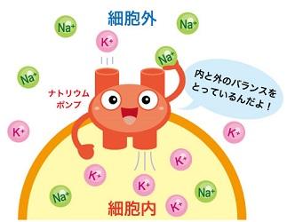 ナトリウムポンプ