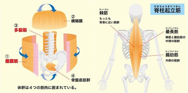 筋肉の説明