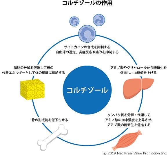 コルチゾール作用