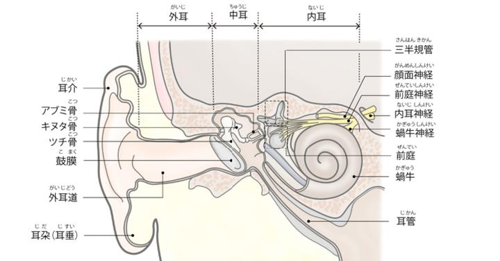 図:内耳には音を感じる蝸牛(かぎゅう)と平衡を感じる前庭(ぜんてい)・三半規管(さんはんきかん)が集まっている