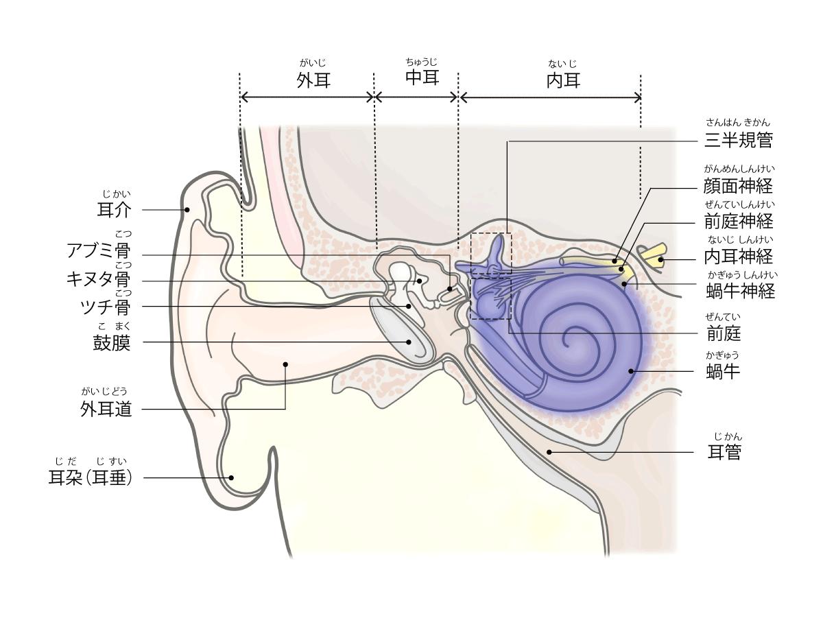 メニエール病の説明画像