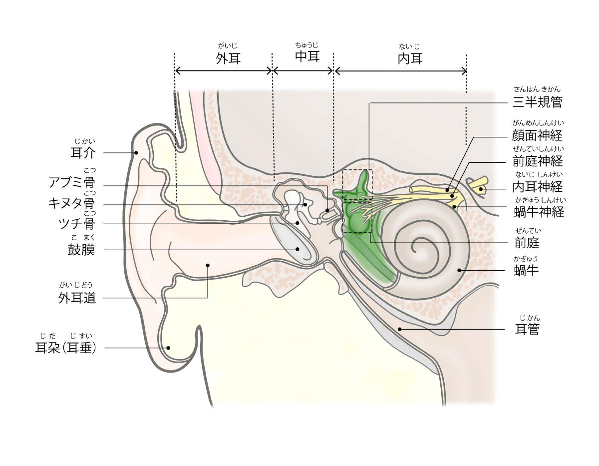 良性発作性頭位めまい症(BPPV)の説明画像