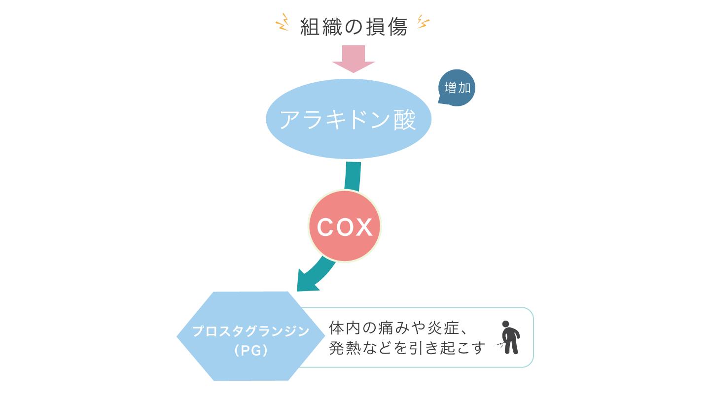 図1 炎症が起こるしくみ アラキドン酸がCOXの作用によりプロスタグランジンに変化することで、痛み・炎症・発熱が起こる