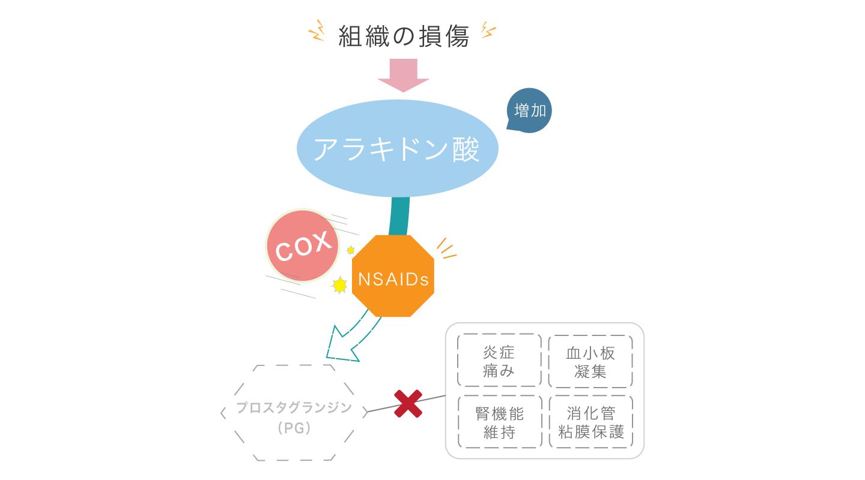 図3 PG生成が抑えられることによる副作用 PGは炎症以外の働きもあるので、NSAIDsによりPG生成が抑えられることでさまざまな副作用があらわれる