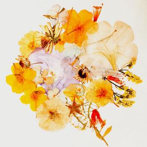 坂口喜咲 お花になりたい