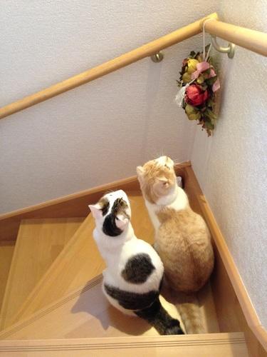 ちび猫2さん