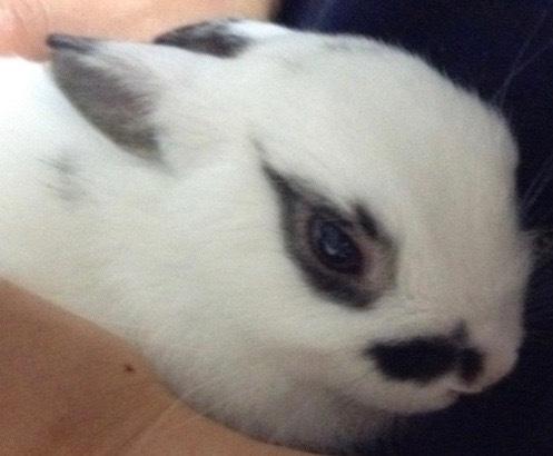 カワイイウサギ