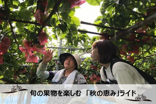 旬の果樹を堪能