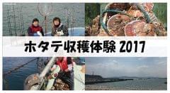 ホタテ収穫体験2017