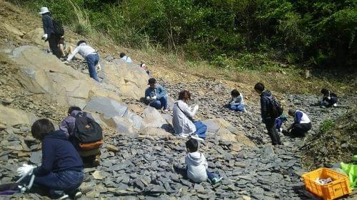 化石発掘!見つけた化石は1つお持ち帰りできます♪