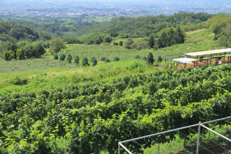 日本でワイン造りが盛んなエリアは?
