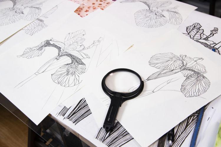 菖蒲の花の下絵