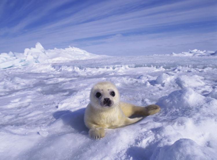 どうせ行くなら海外旅行で!世界のこんなところで楽しめる「流氷ツアー」