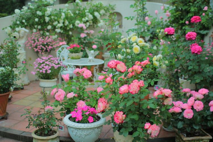 3.バラの花にチャレンジ