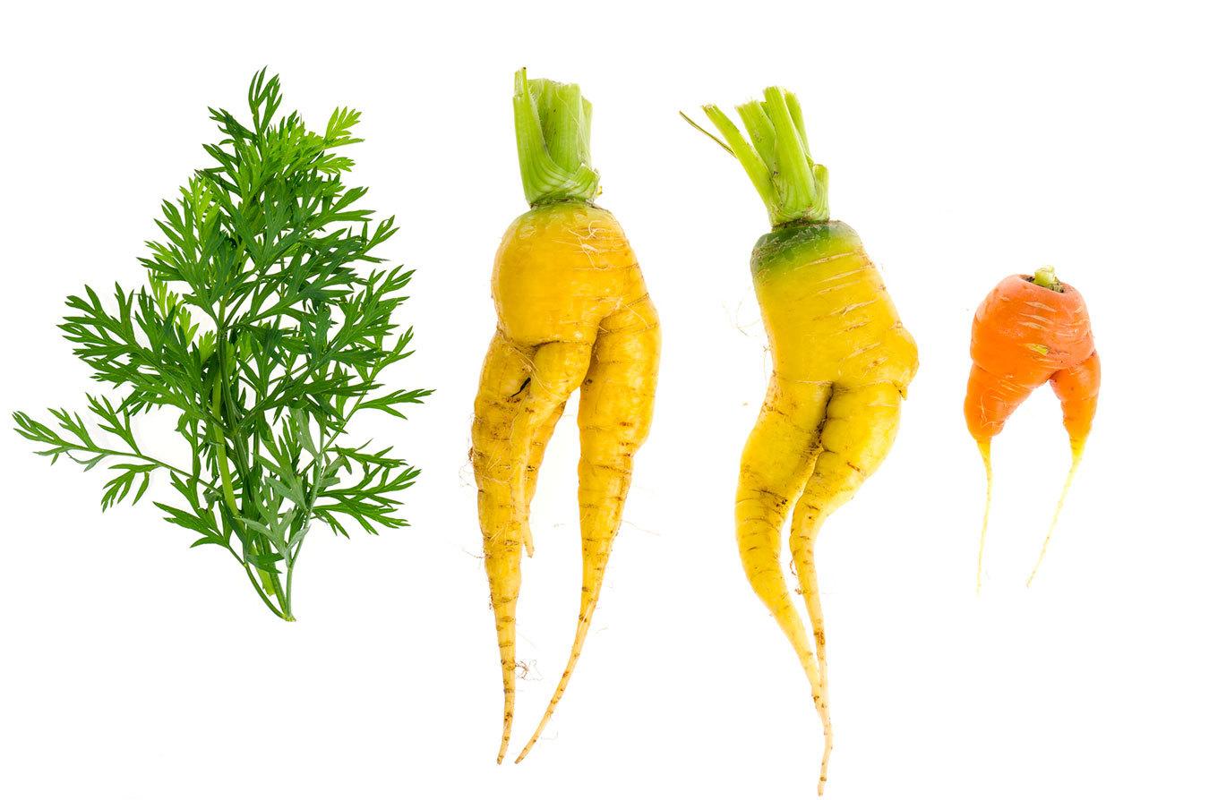 未来に向けて考える、食品ロスを減らすための取り組みとは
