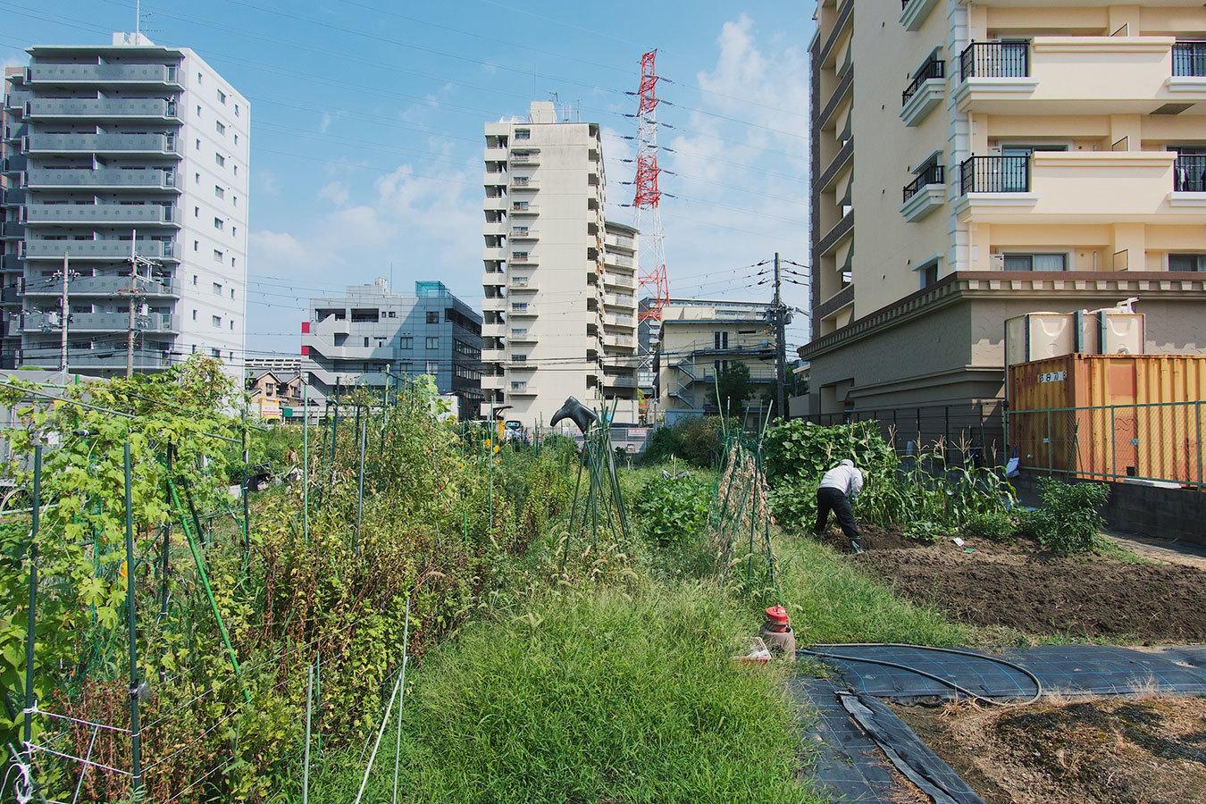 都市農業とは?これからの社会が考えるべき新しい緑化の形