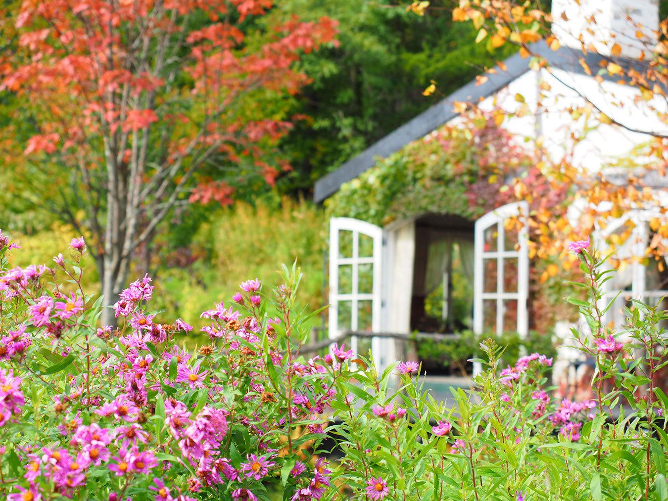 庭のある生活を楽しむ!憧れのマイガーデン作り