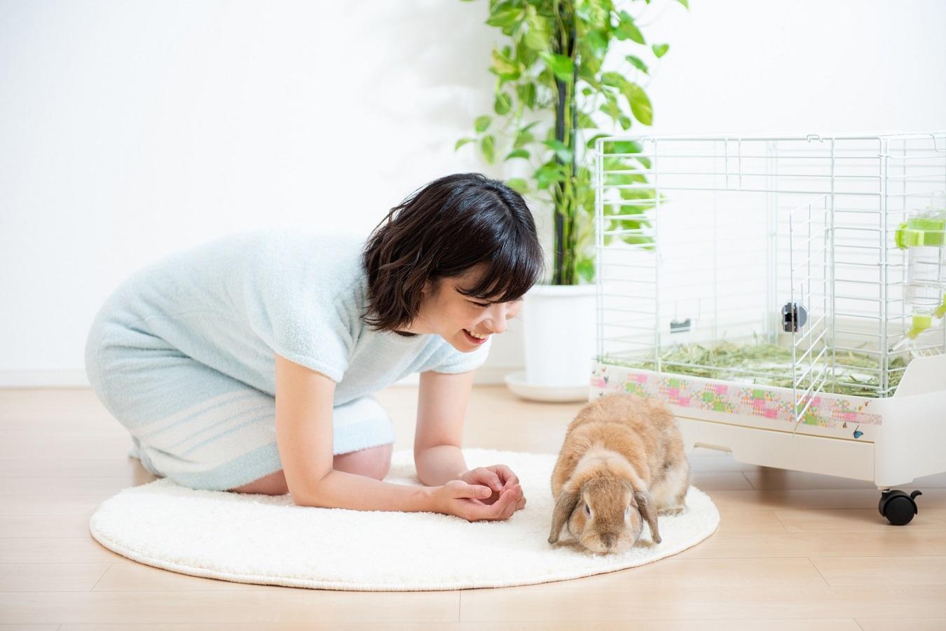 犬猫が飼えない家庭にも。うさぎを飼う前にチェックしたいこと