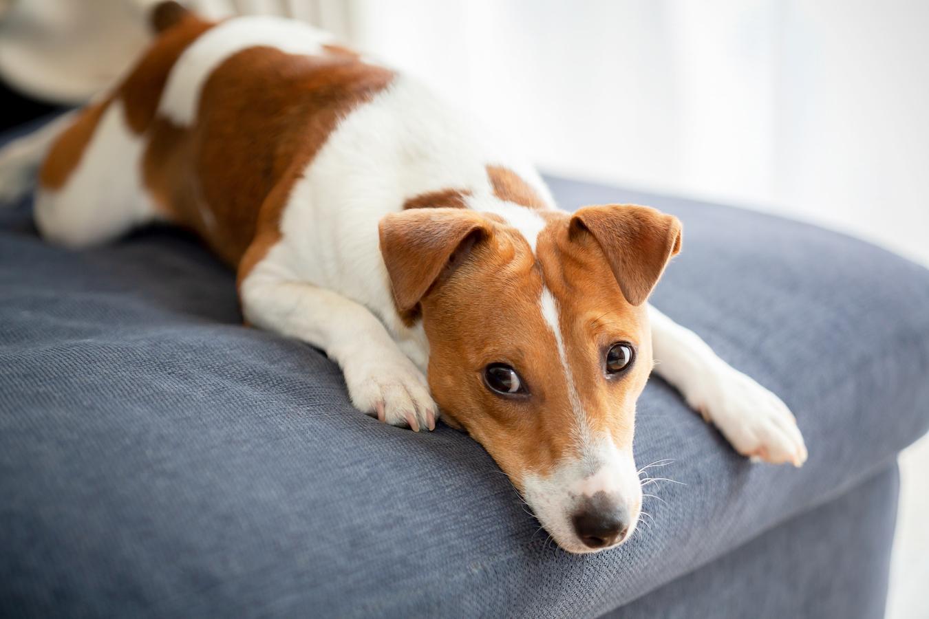 犬を飼っている家庭は「犬税」がかかる