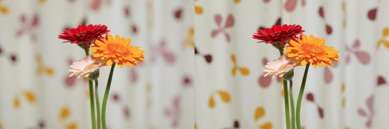 同じ焦点距離でF値を変えて撮影した作例。左のほうが背景がぼけている