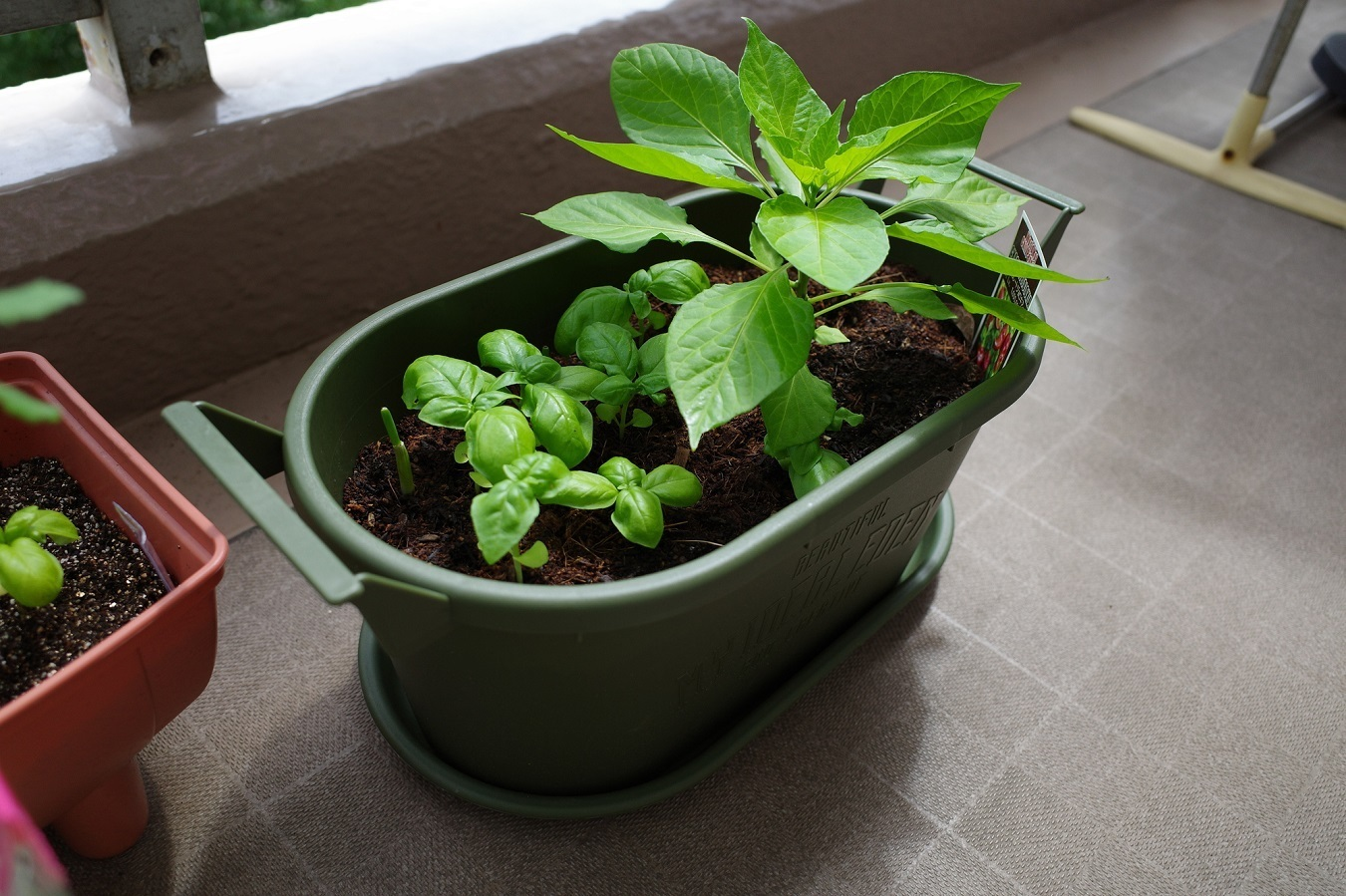 外出自粛の影響で家庭菜園の人気が上昇中