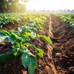 「2022年の生産緑地問題」が不動産に与える影響を考察する|我々はどう対処すべきか