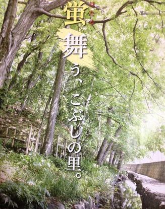 こぶしの里-ホタル-蛍-001