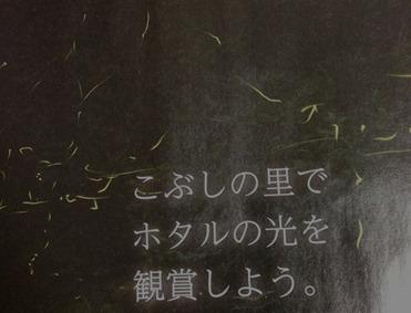 こぶしの里-ホタル-蛍-002