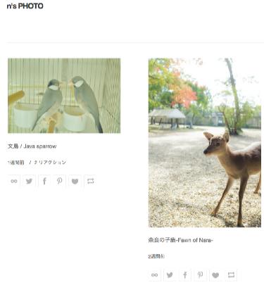 N s PHOTO 動物タグ