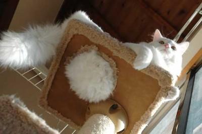 猫にマタタビってホントに効果あるのよ