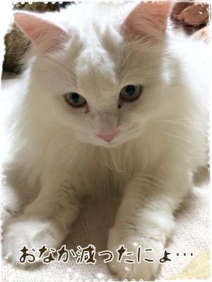 ソラネコさんちの思い出 page4 猫をお風呂に入れると…