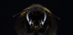海外で蜂に刺されたら