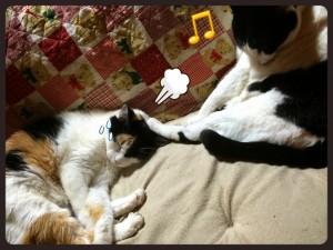 猫も末っ子気質とかあるっぽい【ソラネコさんちの思い出】page6