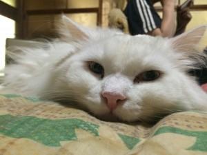 寝込みをこっそり…ネコもそういう事するんだねw【ソラネコさんちの思い出】page8