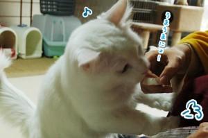 ネコのおやつタイムは戦争です(うちだけじゃないはず)【ソラネコさんちの思い出】page12