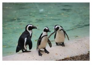 ペンギンの同性愛!?🐧のお話
