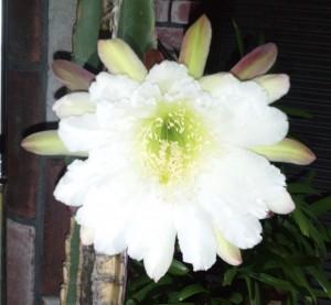 たまにはNEMネムXEMゼムやめました。儚き花をみてNEMの大輪が咲く。