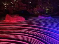 千年煌夜「博多ライトアップウォーク」