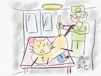 【家猫のチビ】病院では手汗がすごい