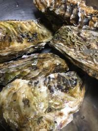 牡蠣を食べよう!