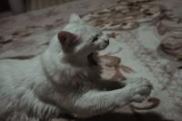 小さい子が遊びに来た時の猫の反応【ソラネコさんちの思い出】page20