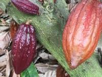 カカオからチョコレートを作る方法