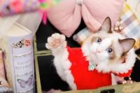 猫ちゃんグッズ nemstoreオープン日が決まりました!