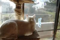 猫じゃらしはこうでないと♪初日編【ソラネコさんちの思い出】page28