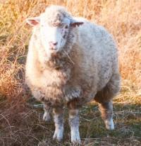 [nemVision] 羊のいる牧場