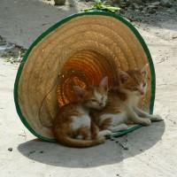 [にぇむろぐ] フライングで失礼します。猫の写真2枚。- 2019.1.22用